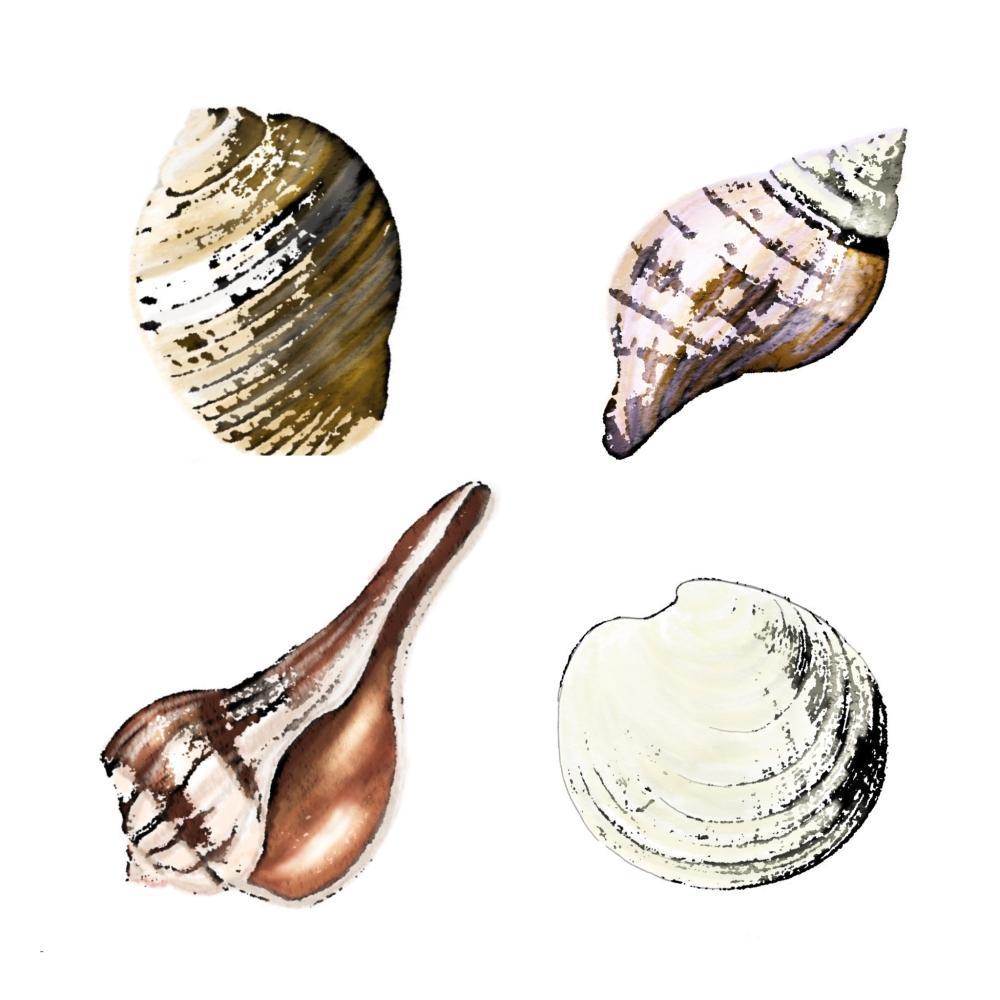 Originale aus dem Wasser